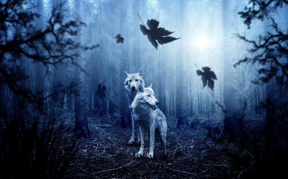 wolf-2864647_960_720.jpg